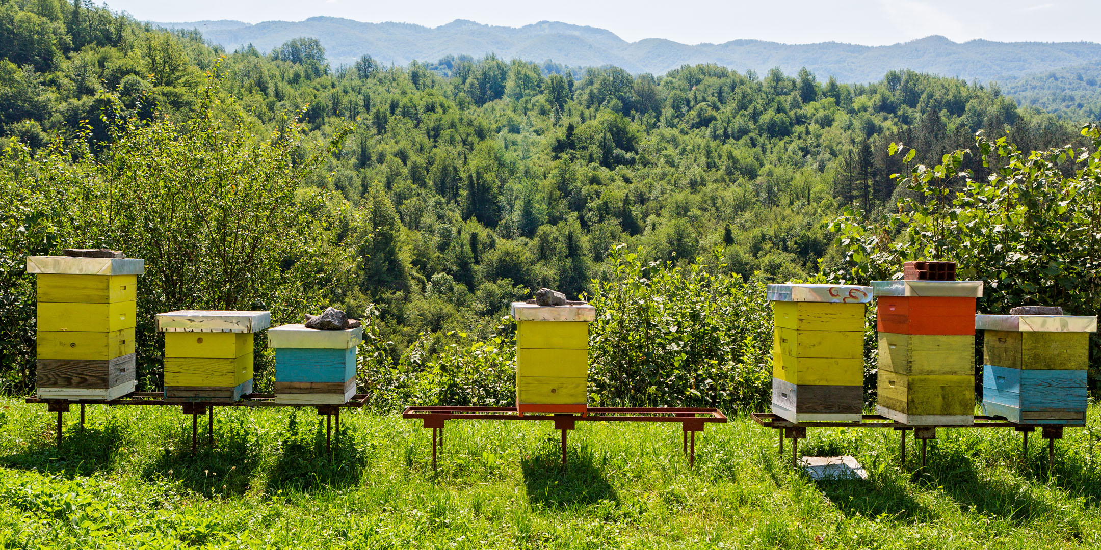 Introduction To Beekeeping The Bee Store