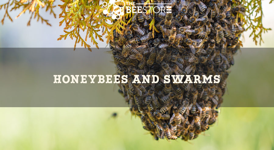 About Bee Swarms