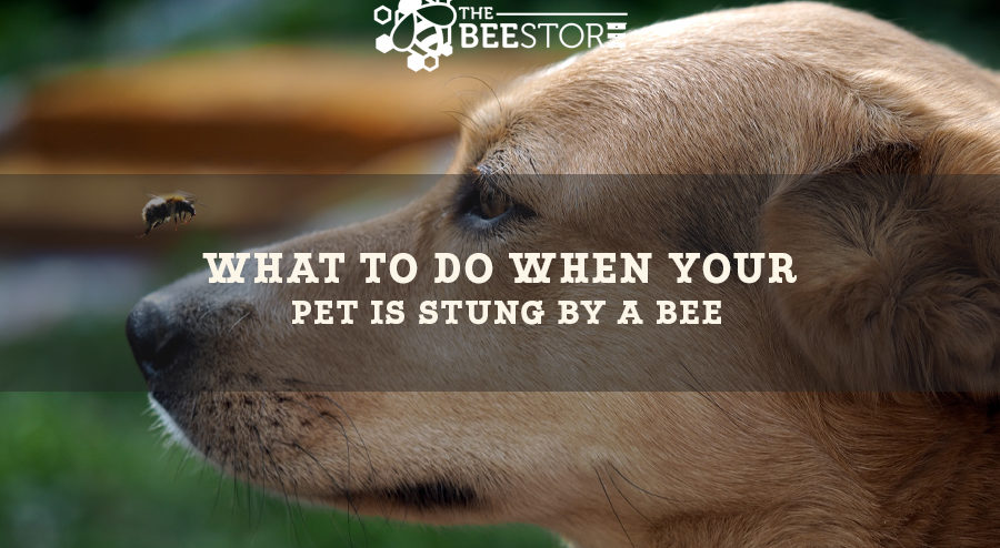 Dog Bee Stings